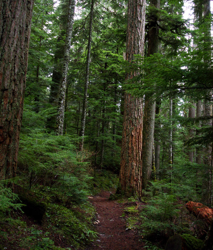 pacific northwest forest - photo #2