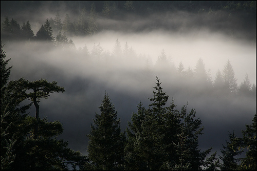 Image result for Pacific Northwest forest winter