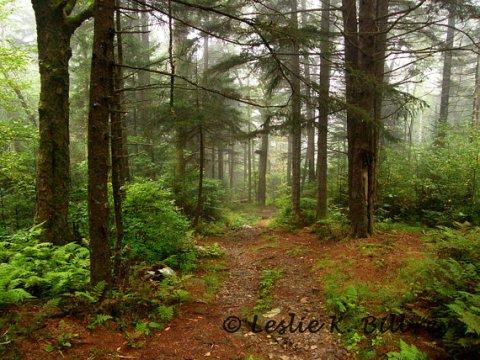 woods | SouthwestDesertLover