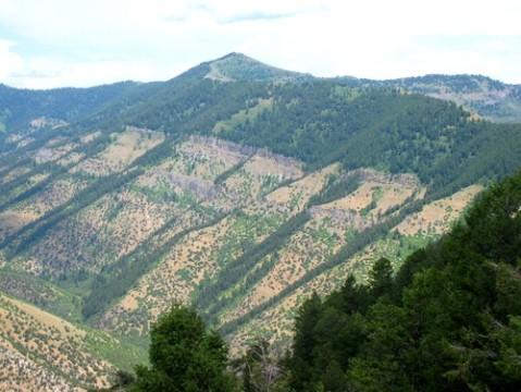 Beirdneau Peak