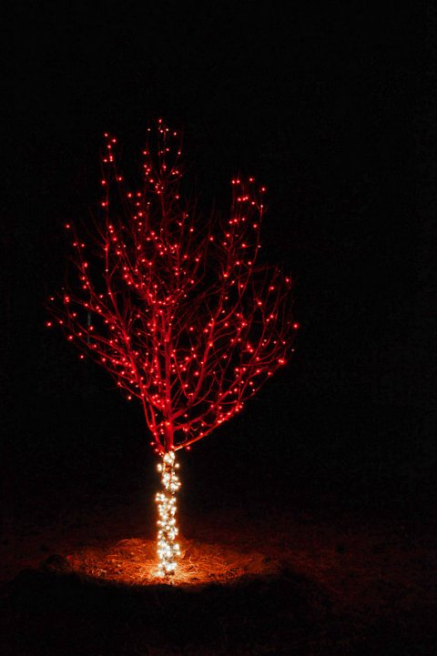 Christmas Lights Red Tree Festive Holiday Home Decorations Lighted Night Before Christmas Cabin Lodge Holiday Photograph