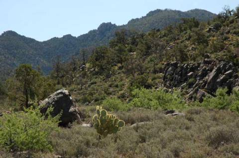 Mount Tipton Wilderness