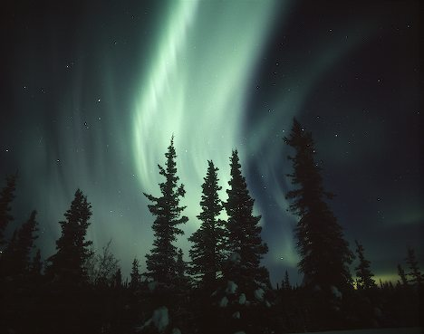 Spruce Forest Under Northern Lights