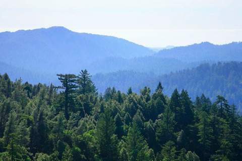 Big Basin Redwoods SP