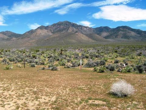 Mount Tipton AZ