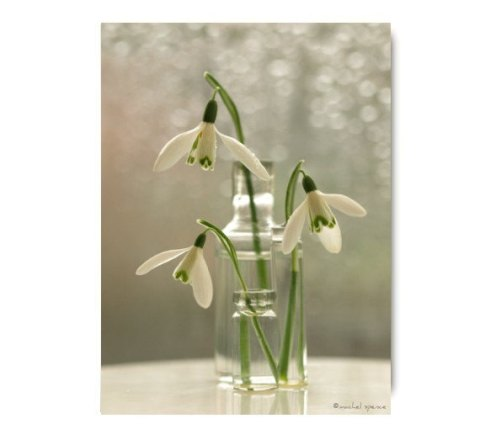 Snow Drops 11X14 Flower Print Green Heart White Flower Galanthus Atkinsii Woodland Flower Forest Heart Flower