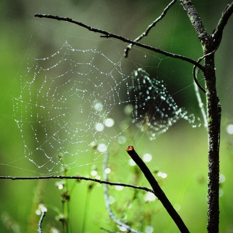 Web of Light 5x5 Fine Art Photograph, Green background, Nature, Home Décor, Bokuh