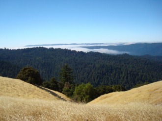 Long Ridge to Portola Redwoods