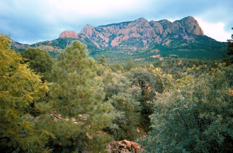 Apache Kid Wilderness Area