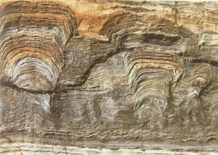 fossil stromatolite