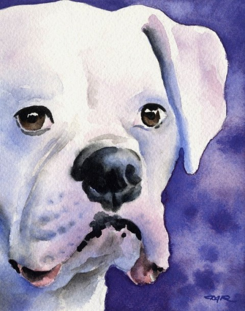 WHITE BOXER Dog Art Print Signed by Artist DJ Rogers