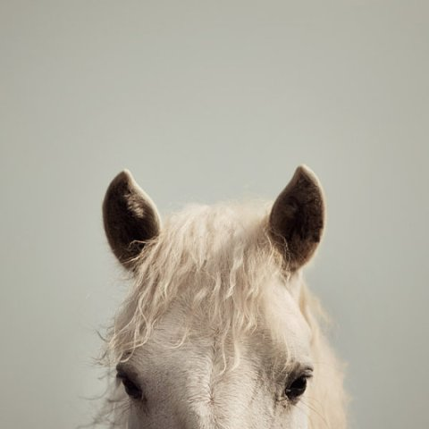 Nature Photography, White Horse Photograph, Whimsical, Nursery Art, Gray and Cream, Spring - Peek-a-boo