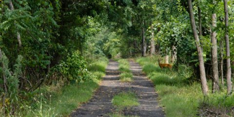 Ashburn Quiet Roads