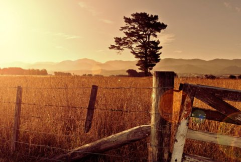New Zealand sunset, field and mountains, summer sunset wall art