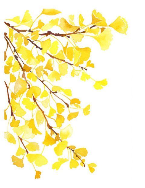 Handmade Watercolor Archival Art Print- Autumn Yellow Ginkgo Leaves