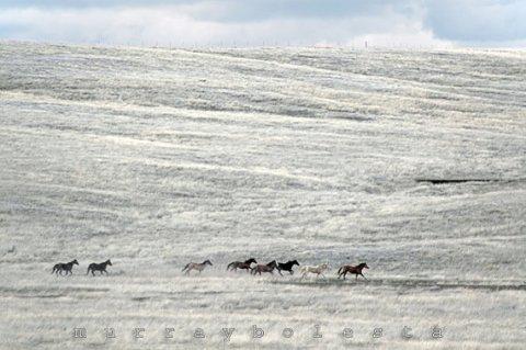 Horse Art, Equine, Equestrian, Photograph, Horse Ranch, Wild Horses, Prairie, Ranch Landscape, Southwest Art 11x17