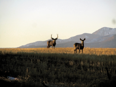 Wildlife and Abajo Mountains