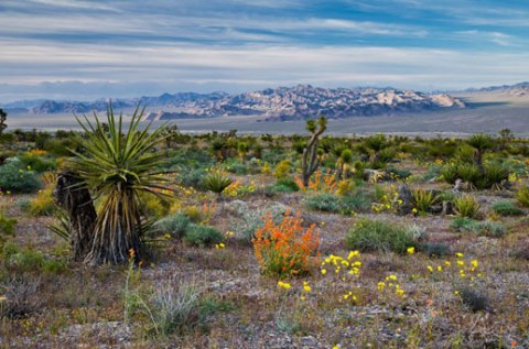Spring Mountains National Recreation Area