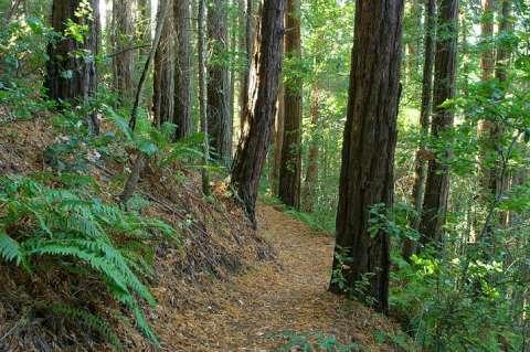 Whitehouse Ridge Trail, Ano Nuevo State Reserve