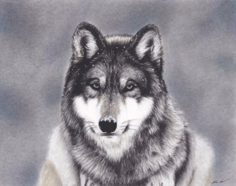Original Mixed Media Charcoal of Wolf in the Snow