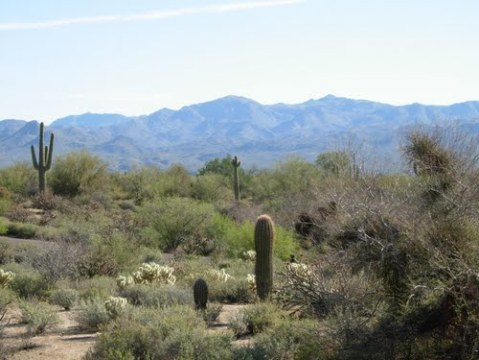 Mazatzal Mountains from McDowell Mountain Regional Park