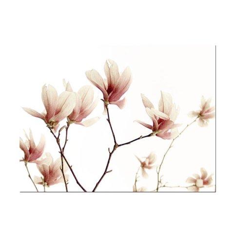 Pink Star Magnolia Flower Botanical Spring Decor Print