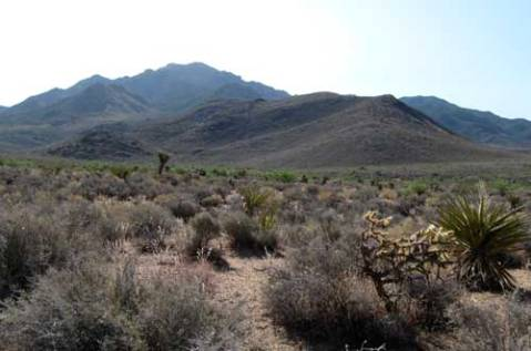 Mt. Tipton Wilderness in Mohave County AZ