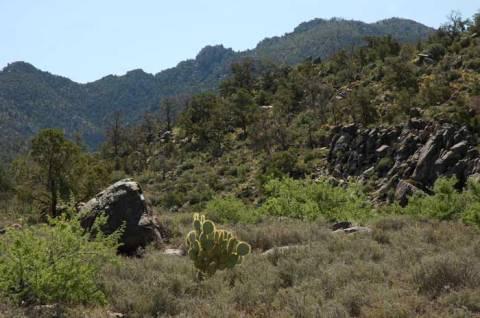 Mount Tipton Wilderness occupies the highest part of the Cerbat Range