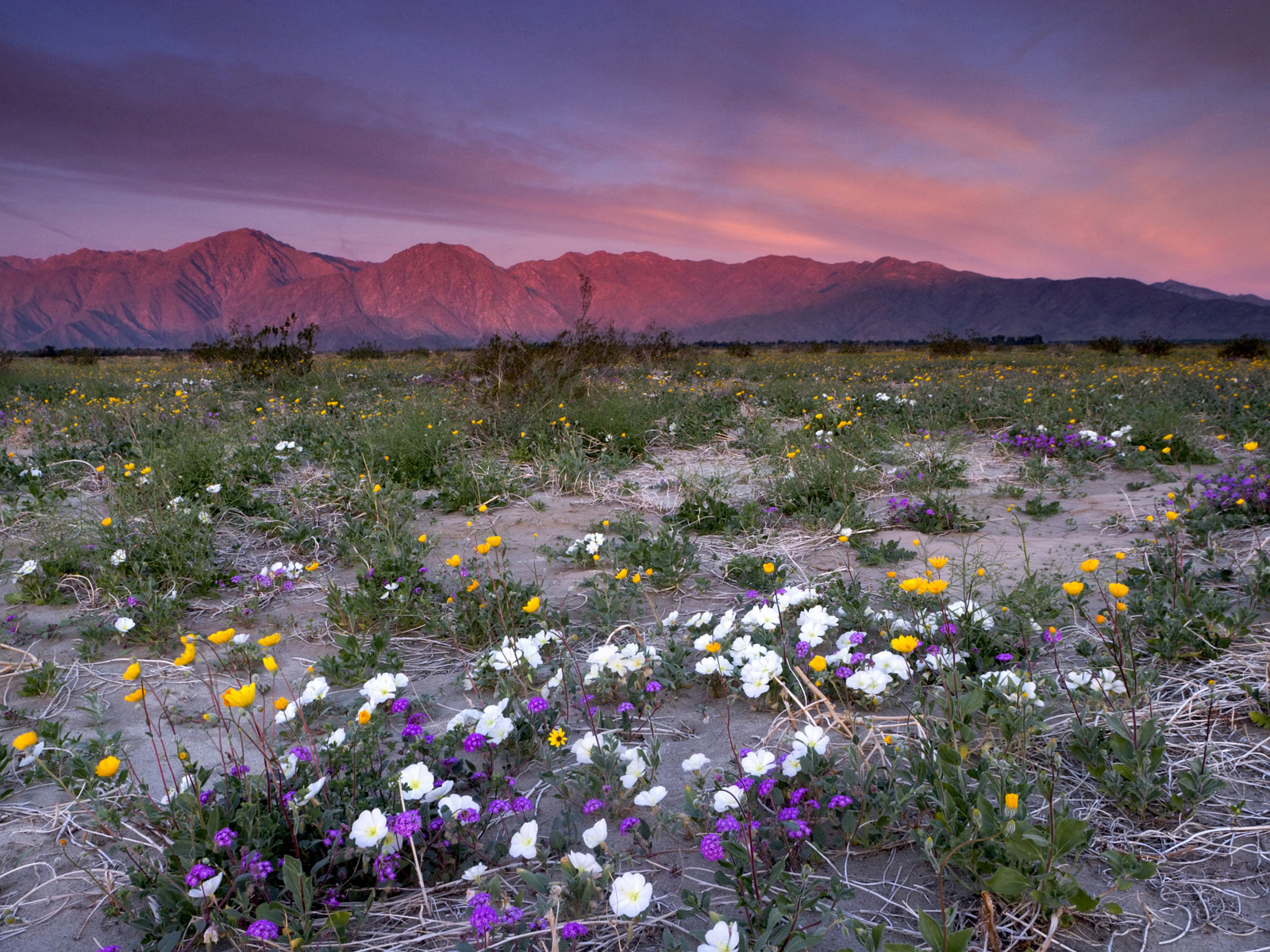 southern california geology southwestdesertlover