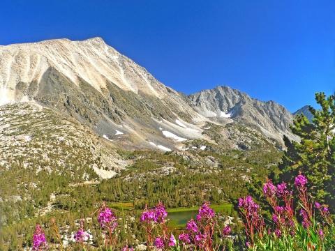 Mt. Morgan