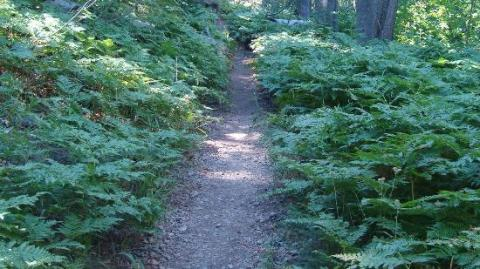 Plumas Eureka State Park trail