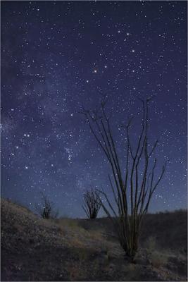Stars over Ocotillo