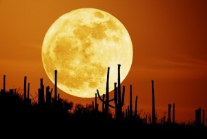 Supermoon and cactus