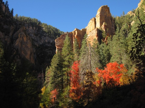 Oak Creek Canyon Fall