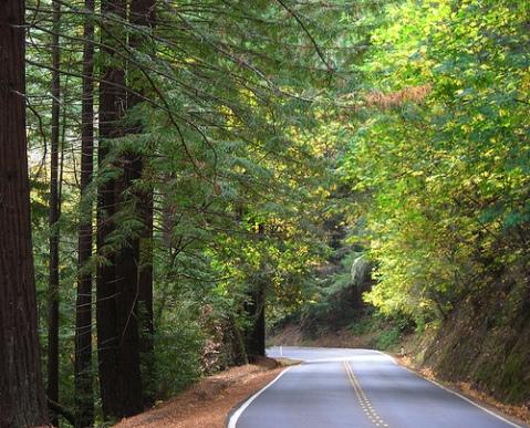 Road near La Honda