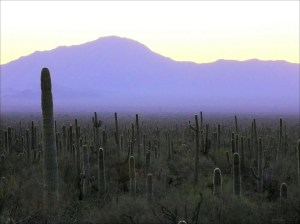 Saguaro forest and Waterman Mtns