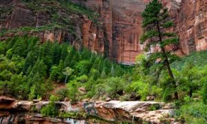 Zion Lower Emerald Pools Trail