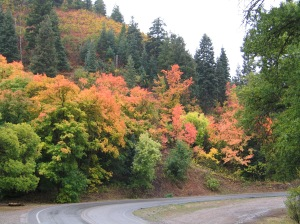 Fall on Nebo Loop