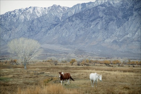 Horse ranch in Owens Valley