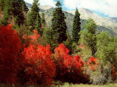 autumn-in-salt-creek-canyon