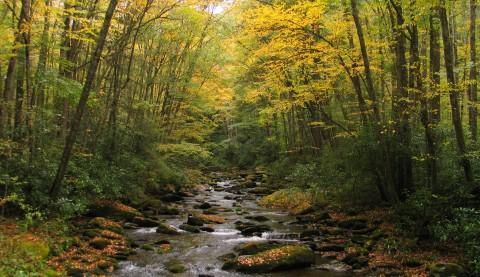 Straight Fork Creek.jpg