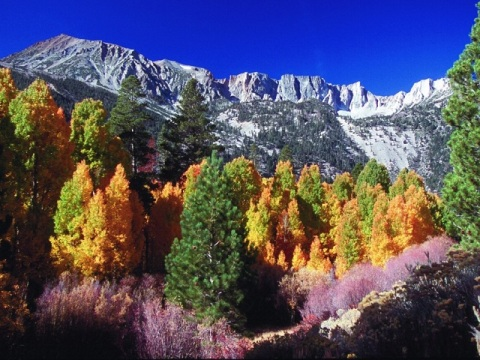 lee-vining-canyon-fall-foliage-california1