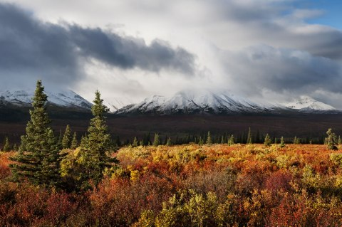 storm-of-colors-autumn-in-alaska-at-denali-national-park-and-preserve