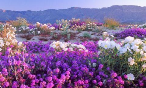 anza-borrego-desert-state-park-4f5e24d746d09d675b000c8e