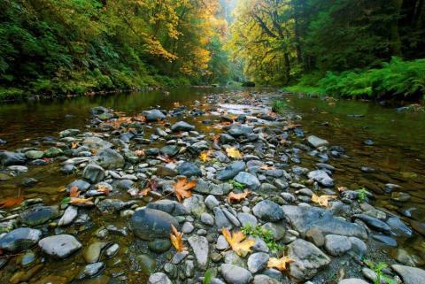 jedadia-smith-redwoods