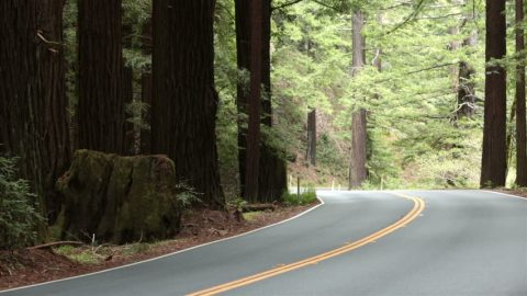 redwoods-road