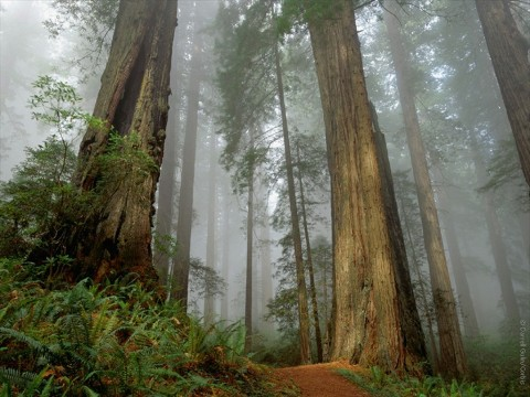 forest-old-growth1