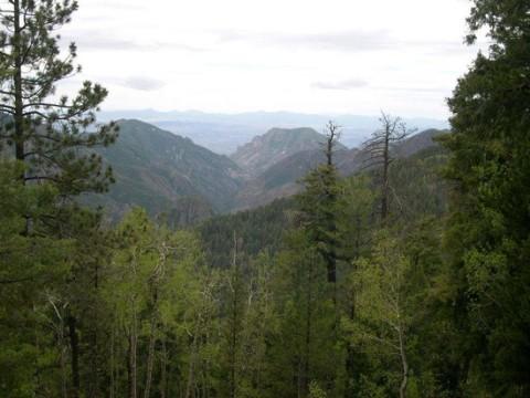 gila-national-forest-mule-deer-hunting