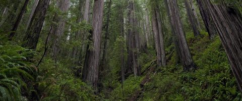 headwaters_forestreserve-widepar-96882-image-wideparimage-0-1-gif