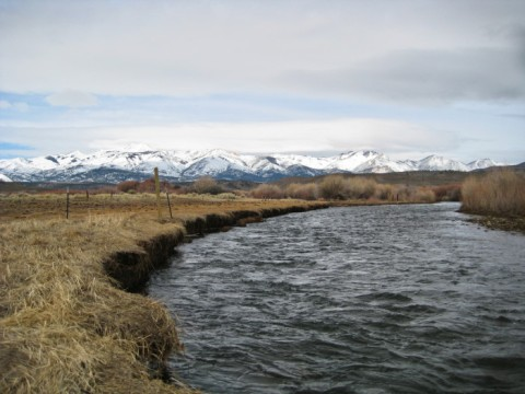 West Walker River in Nevada